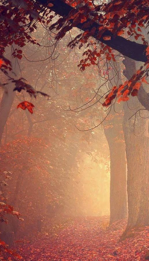 Nature Wallpapers, nature images, nature pictures, Red forest #hdwallpaper, Download in high resolution at http://fabuloustopwallpapers.blogspot.com.br/2015/04/papel-de-parede-natureza-outono_24.html
