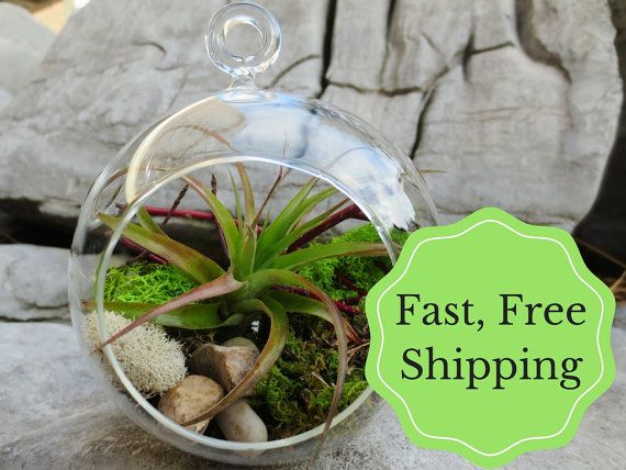 This colourful, woodland themed air plant terrarium is a perfect, pint-sized glimpse into a vast mossy world. The glass terrarium can be hung anywhere, or placed on a shelf or desk to add a burst of flair and colour. The kit contains all the essentials: reindeer moss, river pebbles, sphagnum moss, an air plant, dogwood sticks, and the sphere itself. All you need to do is put them together, adding a final burst of individual style! This kit makes a memorable gift, or you can keep it for…