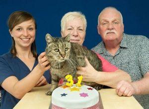 Кот по кличке Натмег на днях отпраздновал свой 31-й день рождения https://rusevik.ru/news/361234