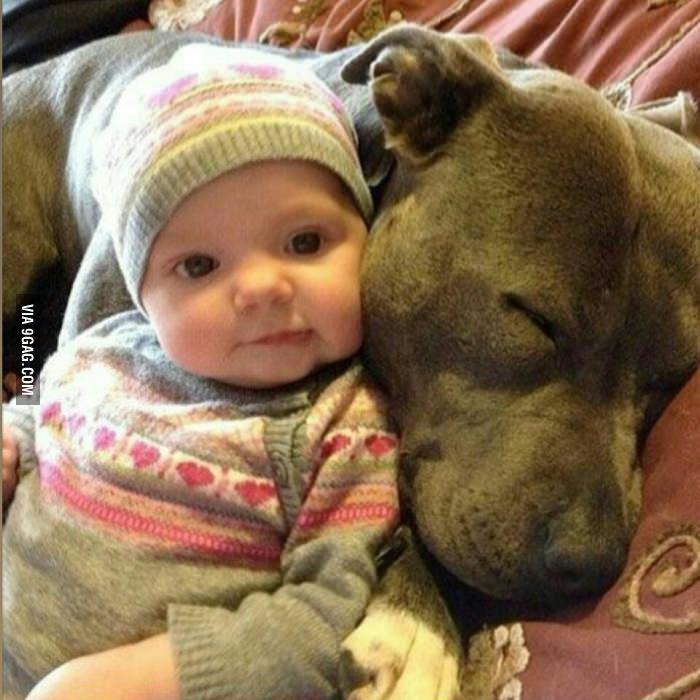 Pitbulls machen fantastische Kissen.