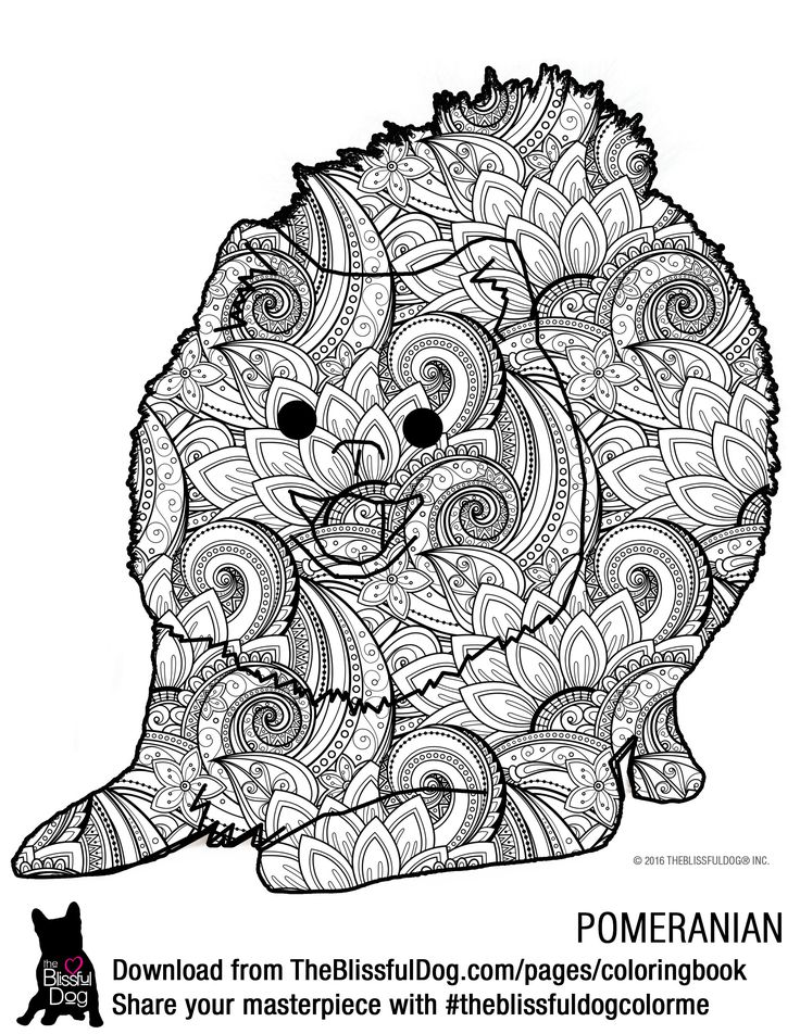 Pomeranian coloring pages free