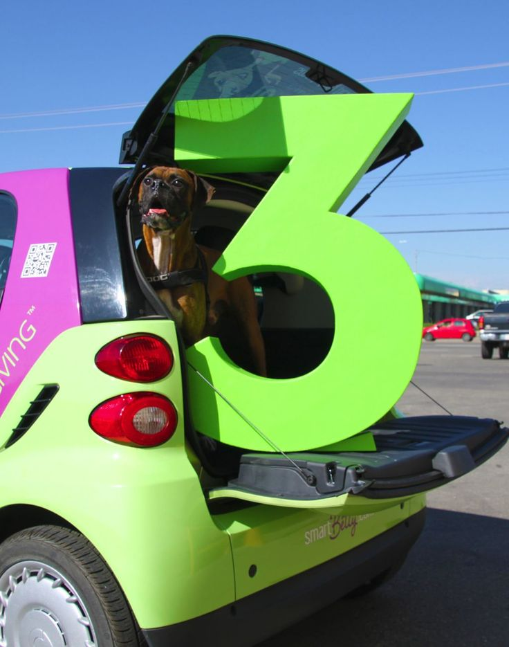 the big green 3 catching a ride in the back of the smart car w/ a canine pal at our #3ThingsforYYC event.