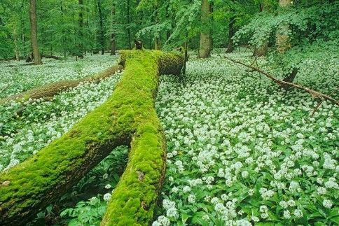 Die letzten Naturparadiese Deutschlands