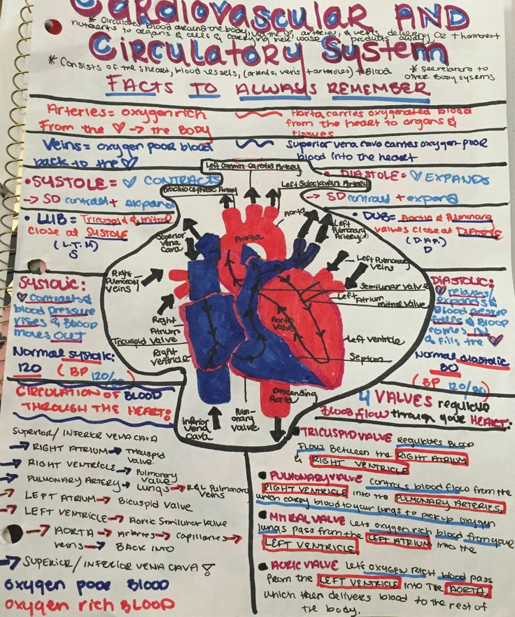 Electrophysiology Of The Heart Physiology Manual Guide