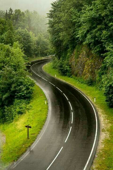 On the road again, through the forrest, woods, trees, beauty, curve,.