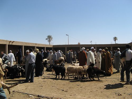 Sheep and goat auction grounds, Rissani, Morocco: Photo