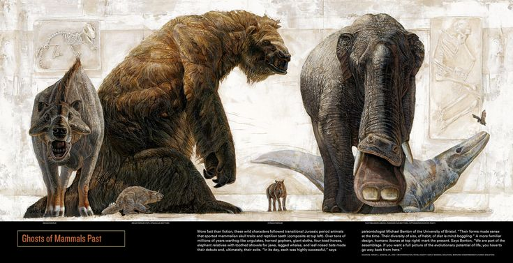 Extinct mammals by the Kennis brothers