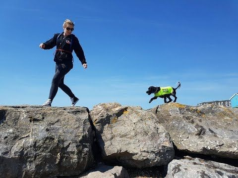 All Inclusive Residential Dog Training Reward Based Training To