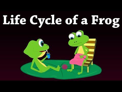 Life Cycle of a Frog - YouTube