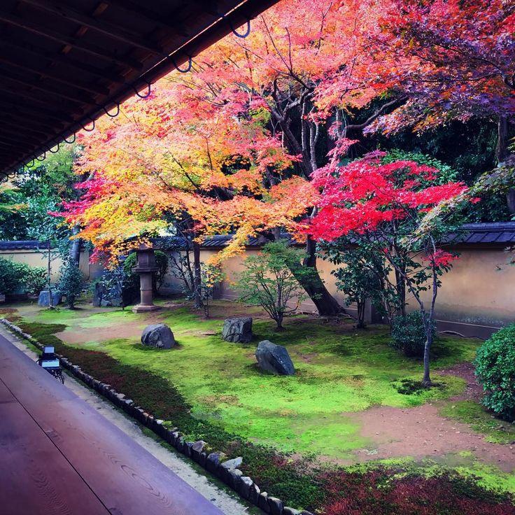 Korinin Temple garden - Kyoto, Japan -- by John Walton (thatjohn) on Instagram