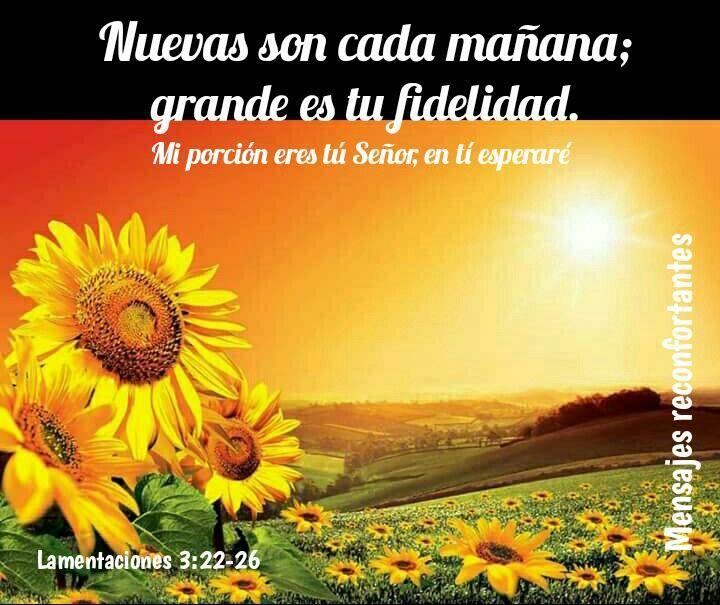 22 Por la misericordia de Jehová no hemos sido consumidos, porque nunca decayeron sus misericordias.  23 Nuevas son cada mañana; grande es tu fidelidad.  24 Mi porción es Jehová, dijo mi alma; por tanto, en él esperaré.  25 Bueno es Jehová a los que en él esperan, al alma que le busca.  26 Bueno es esperar en silencio la salvación de Jehová. Lamentaciones 3:22-26 Grande es tú Amor.  🙏🏼👣🌹