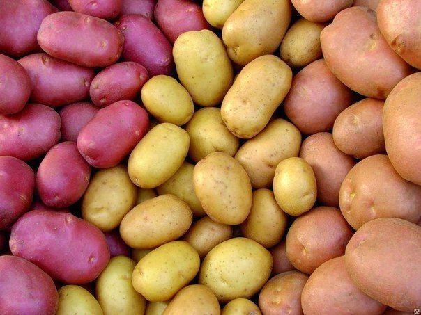 Девять советов для высокого урожая картофеля    Дачники
