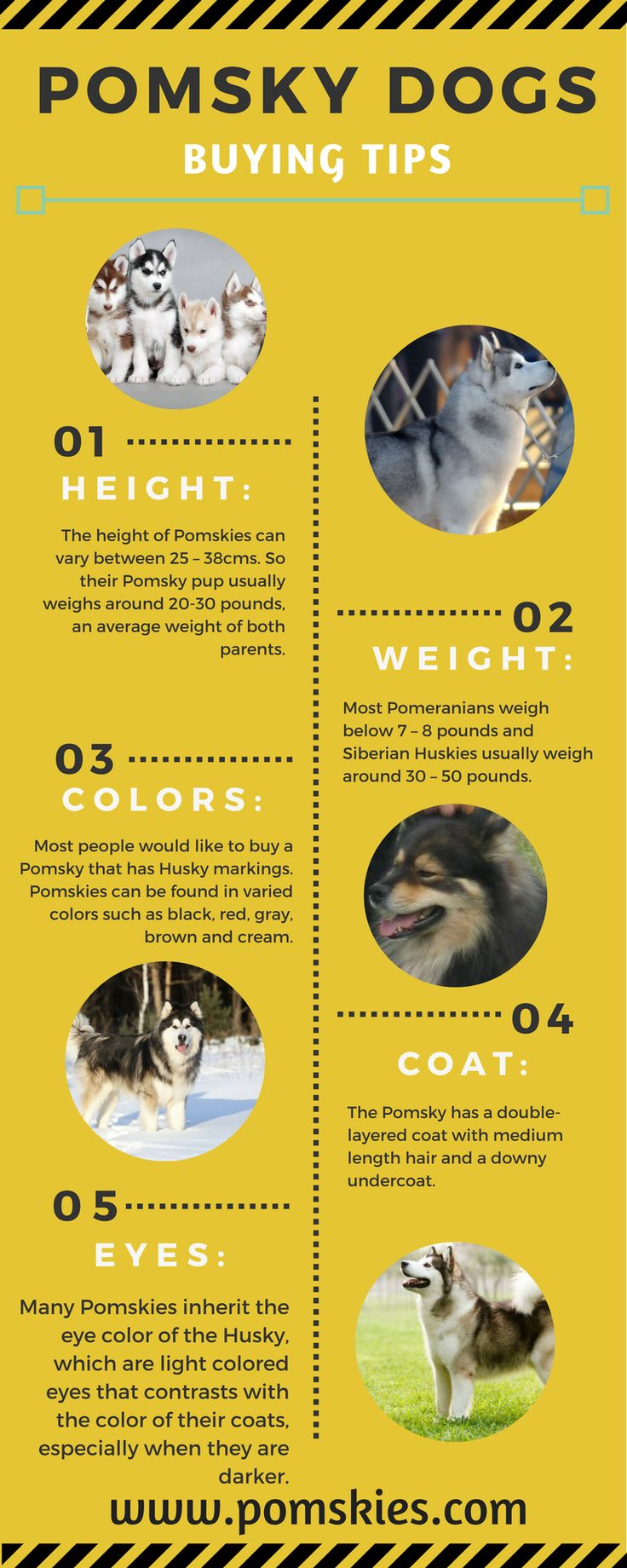 Buying Tips for Pomsky #Dogs  Pomsky is cross breed dogs. It is a mix breed of Husky and #Pomeranian. This buying tips will help to save your money. Main aspects while buying Pomsky dog are Height, Weight, Colours, Coat, Eyes, & Ears. You can get all these characteristics at http://www.pomskies.com/  http://www.pomskies.com/