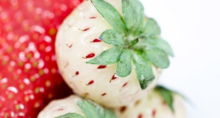 'Reverse' strawberry set to hit shelves: Pineberries- InDaily Adelaide