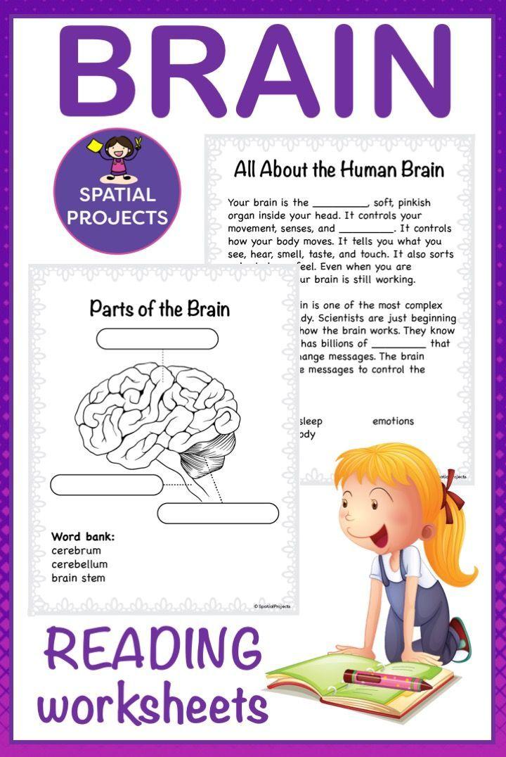 All About the Human Brain | Whole brain teaching, Third ...