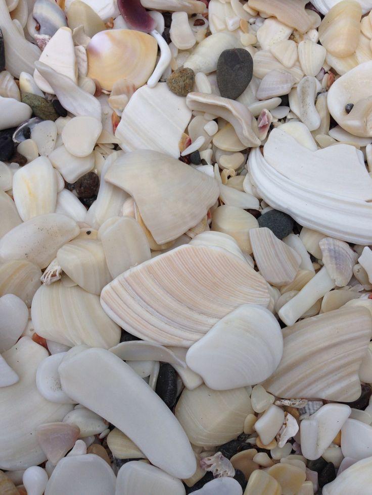Shell hash at Otarawairere Beach #exploring #beach