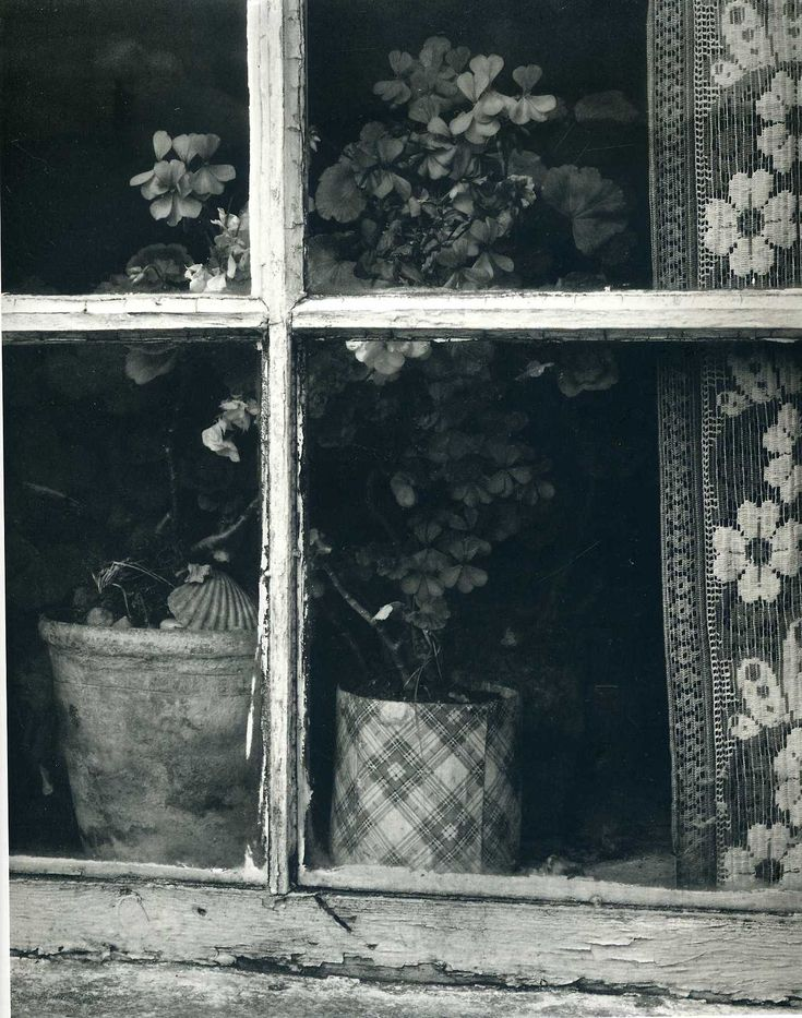 Paul Strand Photography - Window - Flowers - Curtains.