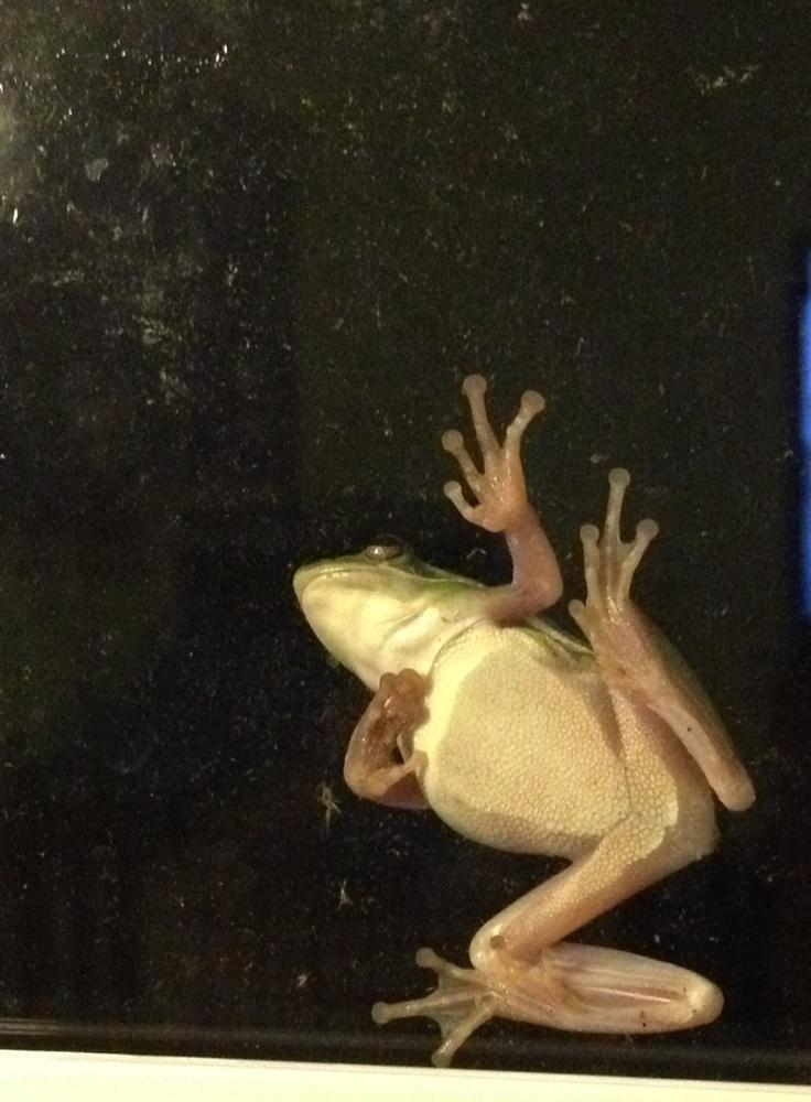 Frog on the window: Window