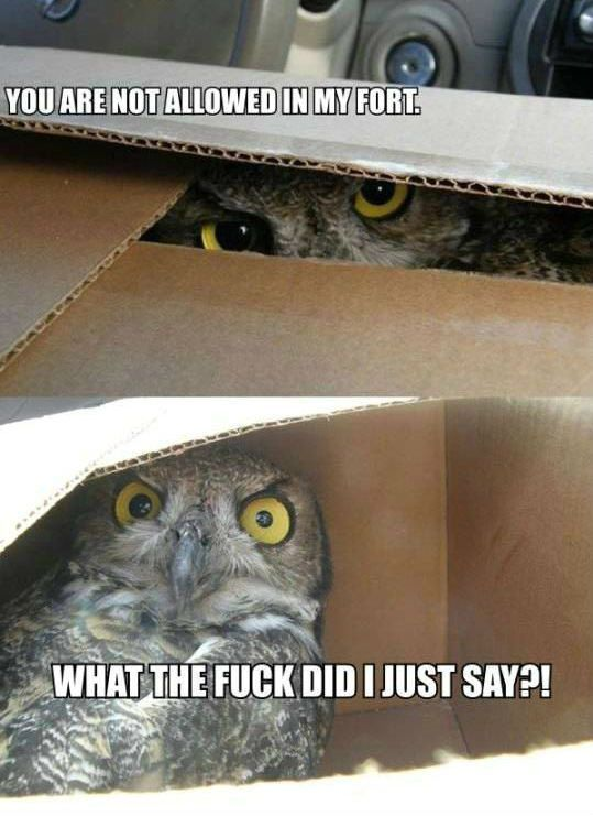20 Hilariously Adorable Owl Memes