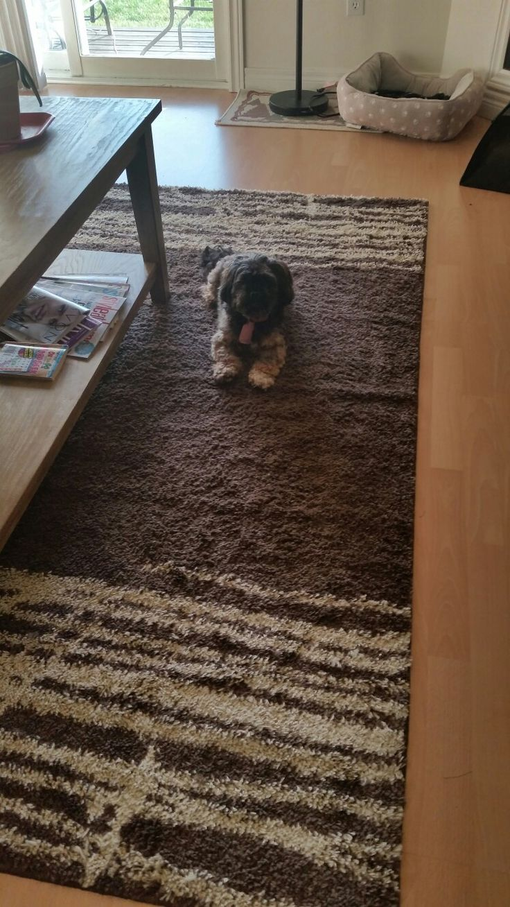 Enjoying the new rug