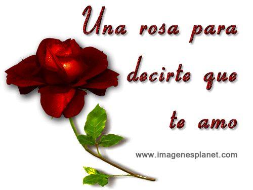 Imagenes bonitas de amor con rosas y frases romanticas