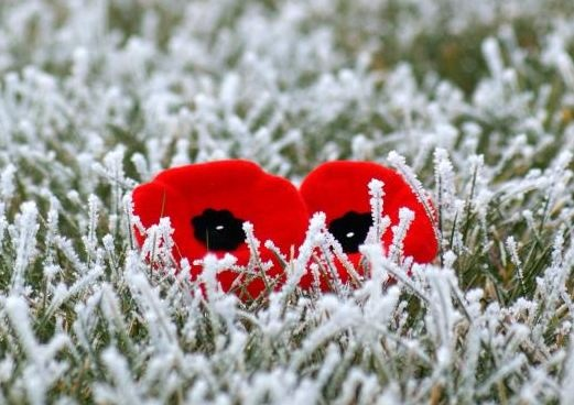On November 11, thousands of Canadians will head outdoors for Remembrance Day ceremonies.