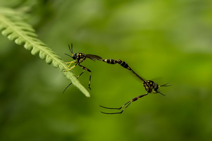 Flying and Matting Bugs
