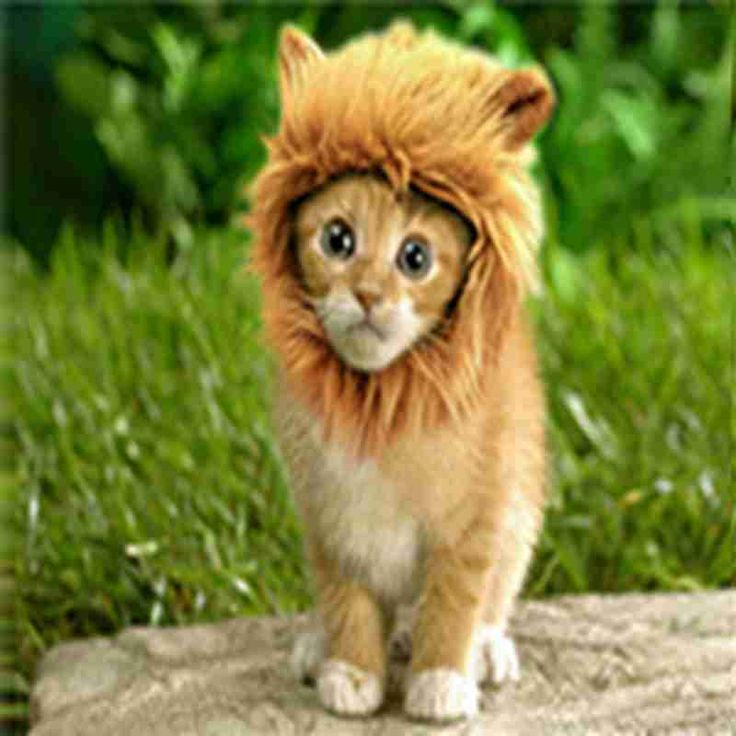 1Pcs Costumes for Cats Furry Pet Hat Costume Lion Mane Wig For Halloween Fancy Dress Up With Ears for Dogs and Cats Decorations // FREE Shipping //     Get it here ---> https://thepetscastle.com/1pcs-costumes-for-cats-furry-pet-hat-costume-lion-mane-wig-for-halloween-fancy-dress-up-with-ears-for-dogs-and-cats-decorations/    #cat #cats #kitten #kitty #kittens #animal #animals #ilovemycat #catoftheday #lovecats #furry  #sleeping #lovekittens #adorable #catlover