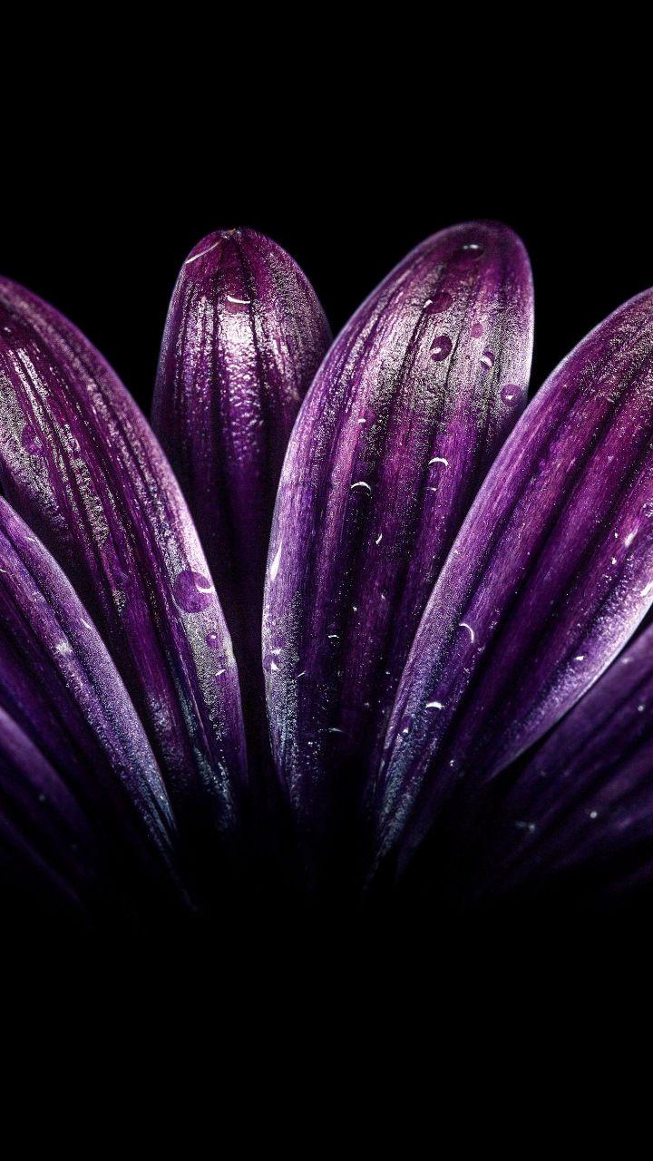 Petals Light Dark Purple Flower Close Up Drops 720x1280 Wallpaper Purple Wallpaper Iphone Purple Flowers Wallpaper Dark Purple Wallpaper