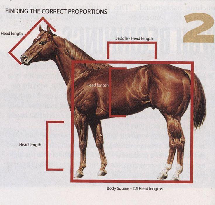 Las proporciones ideales en un caballo