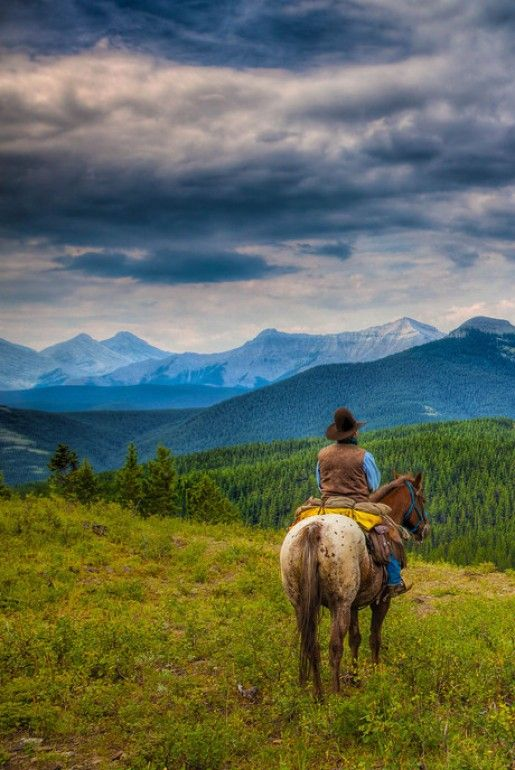 43 Best Horses Trail Riding Images On Pinterest Trail