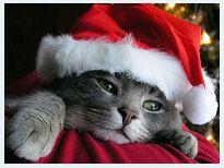 Pillolina di Peppa sul Natale: Presepe, Albero, Villaggio di Santa Claus, foto e curiosità http://pilloline.altervista.org/presepe-albero-villaggio-babbo-natale/
