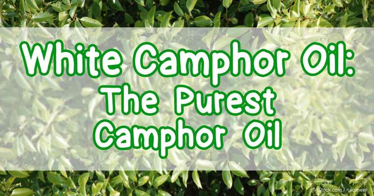 White camphor oil is not only a balancing oil, it also has a lot of good things to offer. Read on to learn the benefits of this essential oil. http://articles.mercola.com/herbal-oils/white-camphor-oil.aspx