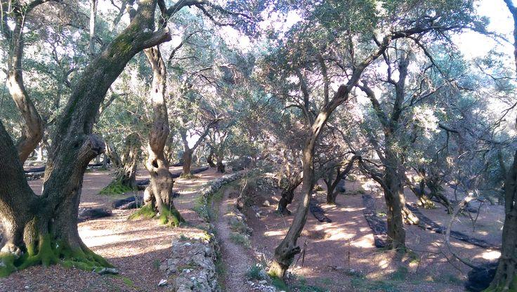 Olive wood, Corfu