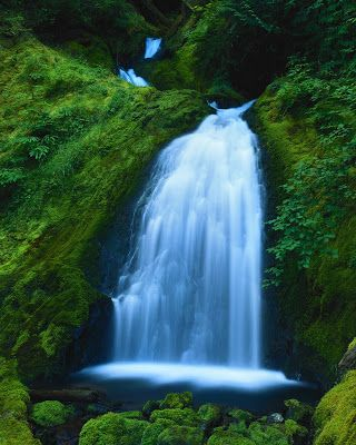Tulipanes cascadas flores y paisajes 12 fotograf as for Imagenes de jardines con estanques