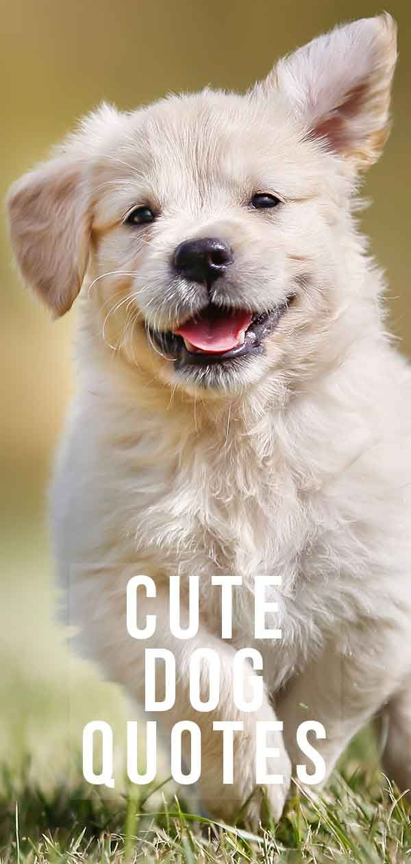Cute Dog Quotes Adorable Enough To Brighten Up Any Day Dog