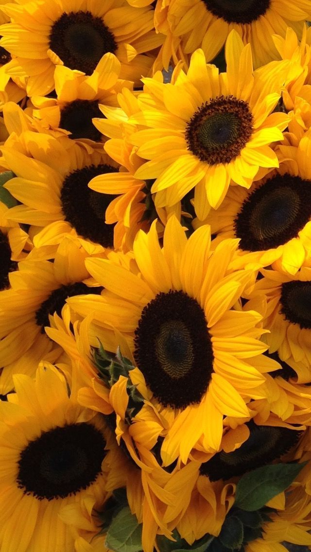 Linda S Favorite With Images Sunflower Wallpaper Yellow Wallpaper