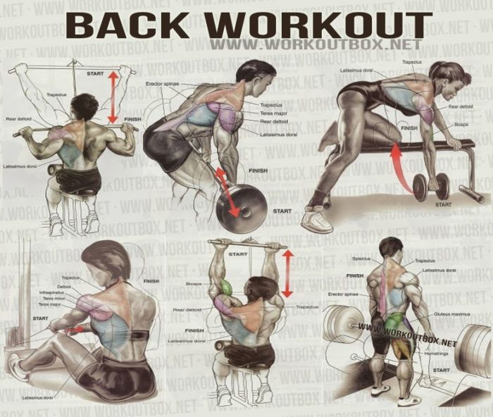 Back Workout - Healthy Fitness Workout Shoulder Delta Sixpack Ab