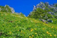長野県駒ヶ根市の中央アルプスの宝剣岳の下に広がる千畳敷せんじょうじきカール その標高はなんと2612m 高原植物が多く咲いており春夏秋冬どの季節に訪れても絶景が広がるスポットです 天空のお花畑のような景色を見たい方は夏がチャンスですよ  tags[長野県]