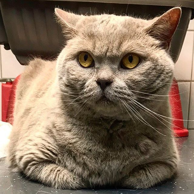 Our pet friend and king of the house Boris is being brave at the vet.  #uwn_holland  #super_holland  #wonderful_holland  #instanetherlands  #holland_photolovers  #dutch_connextion  #ig_discover_holland #artsyheaven  #fotocatchers  #ig_world_colors  #worldbestgram  #people_and_world  #main_vision  #inspiring_photography_admired  #ig_dynamic  #ig_today  #ig_europe  #animals_in_world  #catsloversworld  #bns_cats  #jr_lovecats  #bestcats_oftheworld  #cats_of_instagram  #catsofins  #cats_of_world…