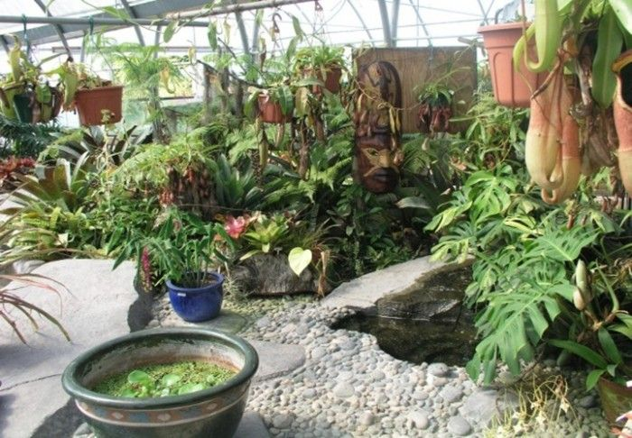 17 best ideas about small tropical gardens on pinterest tropical house plants large indoor - Suitable indoor plants ...