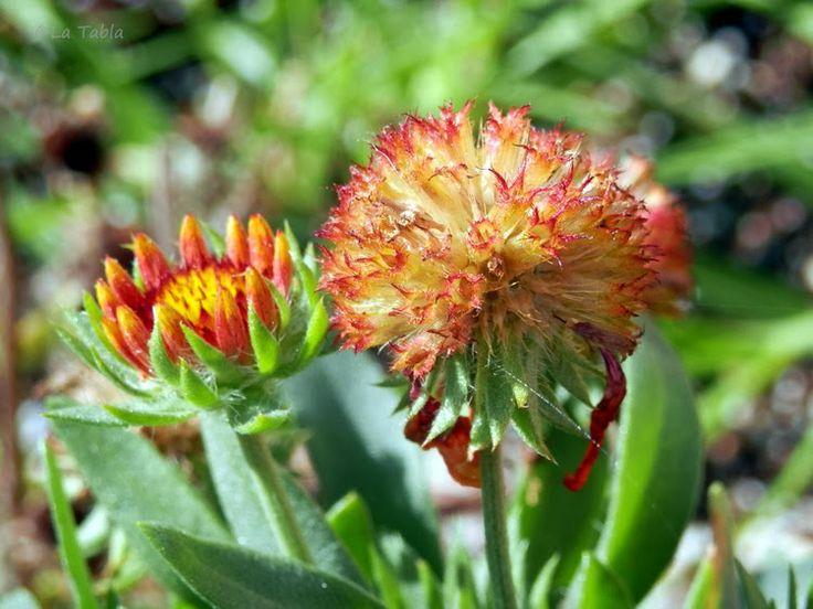 17 mejores im genes sobre plantas para jardin mediterraneo for Plantas jardin mediterraneo