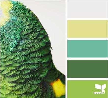 Parrot Colours ~ lovely, different colours.