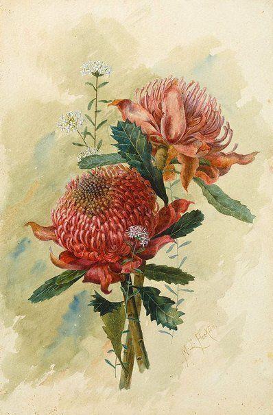 Waratahs in 1895 by Margaret Lilian Flockton. Watercolour. Art Gallery NSW.