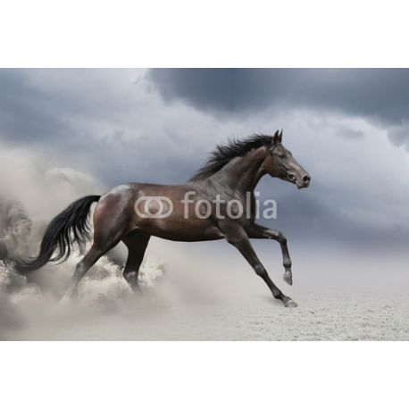 Obraz na płótnie - Biegnący koń - dostępny w rozmiarach 40x26, 60x40, 70x45, 90x60, 120x80, 150x100 #fedkolor #obrazzezdjęcia #obraznapłótnie #koń #bieg #biegnącykoń #dynamika #dynamizm #zwierzęta #obraz #ciemnechmury #sztuka #art #dopokoju #dosalonu #doprzedpokoju #dodomu #domieszkania #pomysł #inspiracja #naścianę #dekoracja #ozdoba