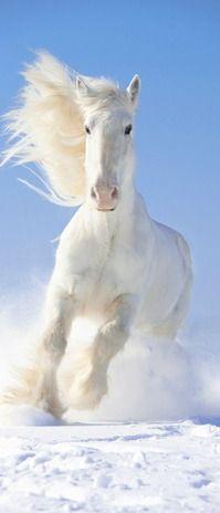 Snow white: horse
