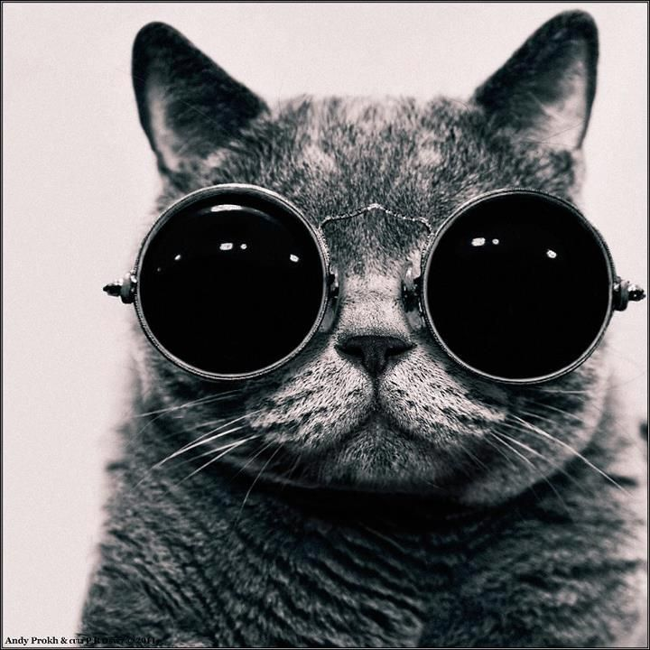 What if I told you...: Kitty Cat, Cool Cat, Glasses, Pet, Big Eye, Steampunk, John Lennon, Coolcat, Animal