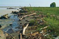 La alteración del régimen climático es la causa de que en algunas regiones los inviernos sean menos fríos y más lluviosos, con lo que se incrementan los desechos que llegan a los estuarios y la frecuencia de las inundaciones en las llanuras deltaicas.
