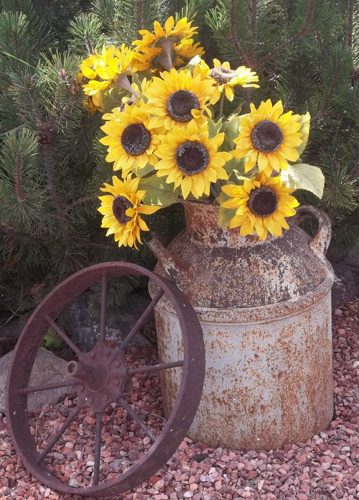 Old Milk Can...stuffed with sunflowers & a rusty wagon wheel in the garden.