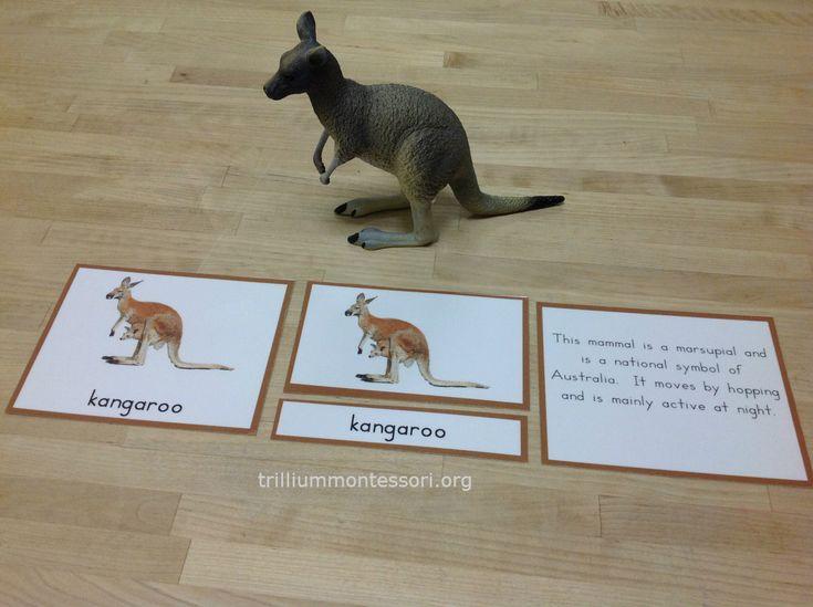 "Free ""Parts of a Kangaroo"" printable from Trillium Montessori"